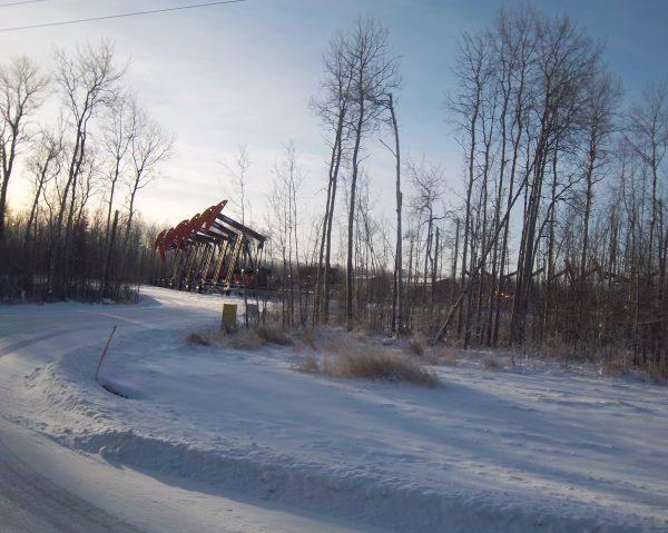 Oilfield Photos. 12 pump jacks on the same location