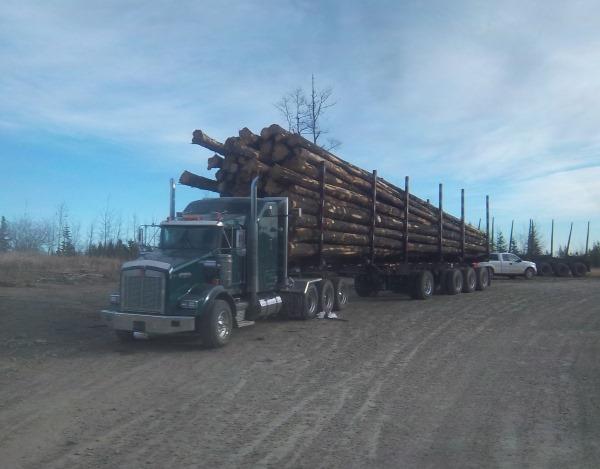 Big Rig Pictures. Kenworth T800 log truck
