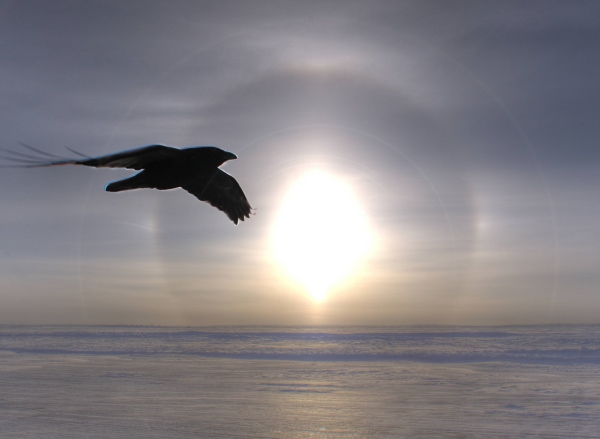 Ice Road Driving Photos. Parhelion (Sun dog) and a raven on the ice roads